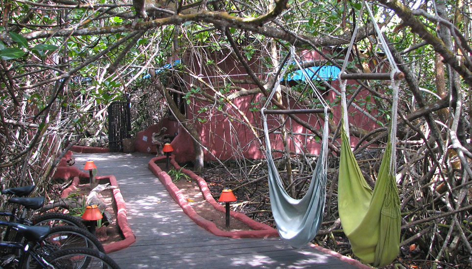 red mangrove paths and hammocks