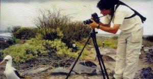 Guy photograph - Nazca booby 1991