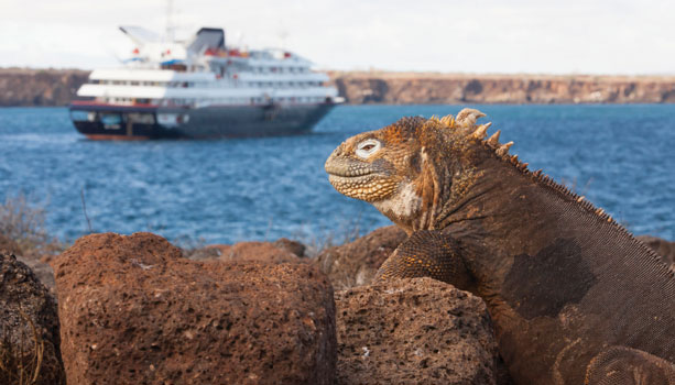 Marine iguana with Boat in the background