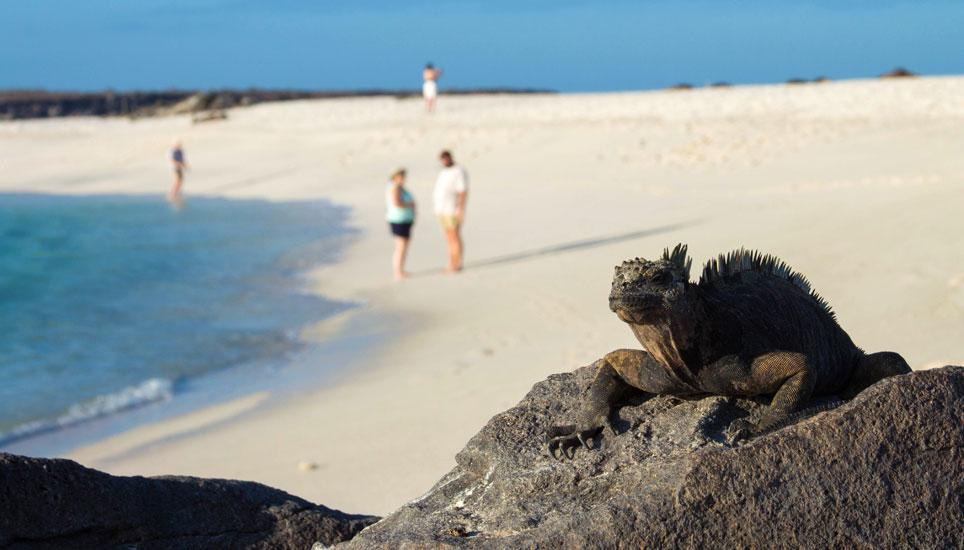 San Jose - marine iguana during land visit