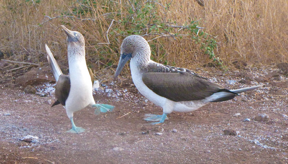 Wildlife of the Galapagos on a Natural Paradise excursion